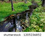 mossy forest river stream water ...   Shutterstock . vector #1205236852