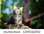 portrait of black ticked white... | Shutterstock . vector #1205262052
