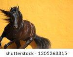 black stallion pivoting against ...   Shutterstock . vector #1205263315