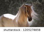 the beautiful grey stallion | Shutterstock . vector #1205278858