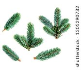 collection of  fir branches...   Shutterstock . vector #1205290732