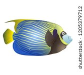 emperor angelfish on isolated... | Shutterstock . vector #1205379712