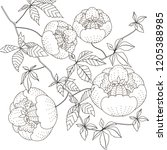 coloring pages. coloring book... | Shutterstock .eps vector #1205388985