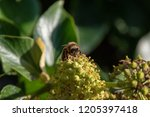 close up of the front of a... | Shutterstock . vector #1205397418