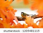 portrait of a little beautiful... | Shutterstock . vector #1205481115