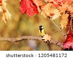 natural background with... | Shutterstock . vector #1205481172