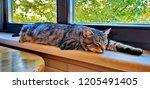 grey tabby cat sleeping on a... | Shutterstock . vector #1205491405