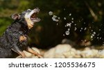 close up  cute little wet black ... | Shutterstock . vector #1205536675