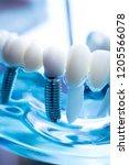 dentist dental teeth teaching...   Shutterstock . vector #1205566078