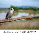 beautiful lovebird on twigs in... | Shutterstock . vector #1205586232
