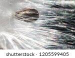 nature abstract  elegant white...   Shutterstock . vector #1205599405