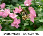 dharma swallowtail image | Shutterstock . vector #1205606782