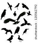 Stock vector black birds 120562792