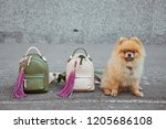 cute small dog sitting with two ... | Shutterstock . vector #1205686108