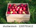 apples red ripe fruits in... | Shutterstock . vector #1205701612