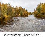 autumn forest river water... | Shutterstock . vector #1205731552