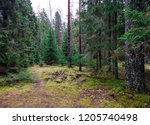 mossy forest trees wilderness... | Shutterstock . vector #1205740498