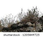 realistic grass silhouettes... | Shutterstock . vector #1205849725