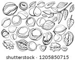isolated vector set of nuts on... | Shutterstock .eps vector #1205850715