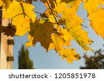 deciduous forest at autumn.... | Shutterstock . vector #1205851978