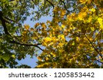 deciduous forest at autumn.... | Shutterstock . vector #1205853442