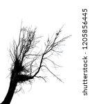 realistic tree silhouette ... | Shutterstock . vector #1205856445