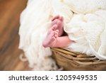 close up of newborn baby feet. | Shutterstock . vector #1205949535