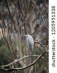 indian white stork | Shutterstock . vector #1205951338
