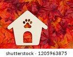 pet message for the fall season ... | Shutterstock . vector #1205963875