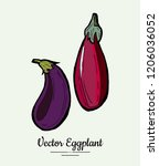 eggplant   hand drawn... | Shutterstock .eps vector #1206036052