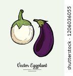 eggplant   hand drawn... | Shutterstock .eps vector #1206036055