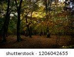 the ancient deciduous woodland... | Shutterstock . vector #1206042655