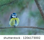 small and colorful blue tit ... | Shutterstock . vector #1206173002