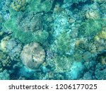 tropical sea coral reef... | Shutterstock . vector #1206177025