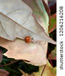 lady bug sitting on the back of ... | Shutterstock . vector #1206216208