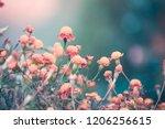 autumn marigold background | Shutterstock . vector #1206256615