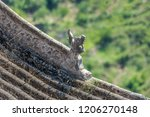 the tiled roof beast of... | Shutterstock . vector #1206270148