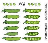 green pea pod. healthy bio... | Shutterstock .eps vector #1206284332