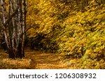 golden fall. silver birch ... | Shutterstock . vector #1206308932