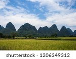 rice fields in china in the... | Shutterstock . vector #1206349312