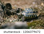 close up of small tortoise... | Shutterstock . vector #1206379672