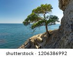 pine on a rocky sea coast | Shutterstock . vector #1206386992