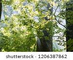 beautiful sunlight filtering...   Shutterstock . vector #1206387862