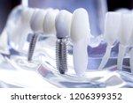 dentist dental teeth teaching...   Shutterstock . vector #1206399352