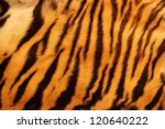 Beautiful Tiger Fur   Colorful...