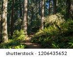 lady bird johnson grove trail... | Shutterstock . vector #1206435652