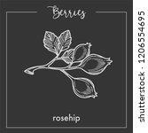 wild rosehip berries on branch...   Shutterstock .eps vector #1206554695