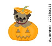 cute pug puppy is sitting in a... | Shutterstock . vector #1206566188