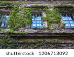 wall of old building grown with ... | Shutterstock . vector #1206713092