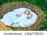 adorable suckling. suckling... | Shutterstock . vector #1206778315